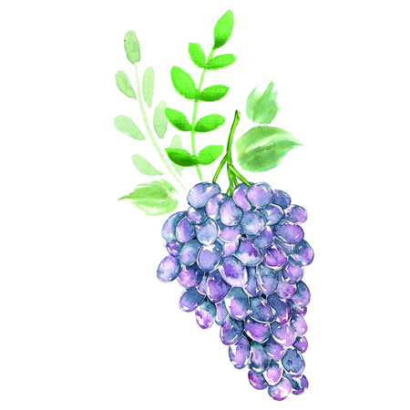 Arrangement watercolor grapes. Bio sweet fruit. Stockfoto