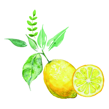 Arrangement watercolor lemon. Bio fruit.