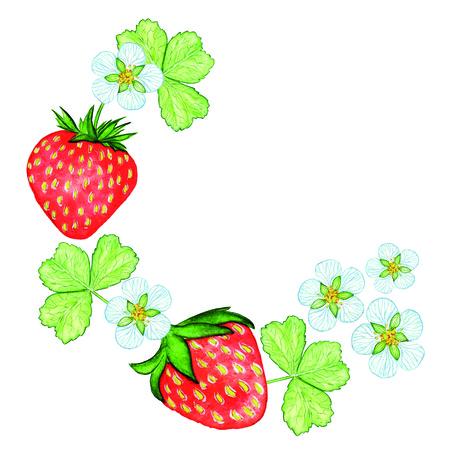 Arrangement watercolor strawberry. Bio sweet fruit.