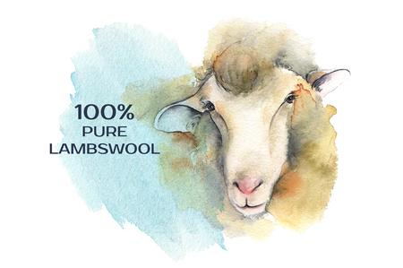 Sheep. Poster farm animals watercolor.
