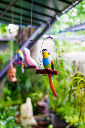 feathe:  colorful parrot in the garden