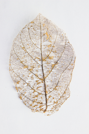 autumnal: Dry leaves on white textures background.dried pattern outdoor dead plant branch nature.leafs flora white yellow stem symbol macro old color detail back cover