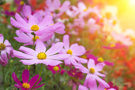 Spring Multi-colored flowers nature. beautiful flowers. Imagens - 80158918