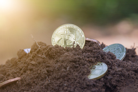 Coins bitcoins buried in dug up from the soil. Bitcoin is the most popular crypto currency in the world.