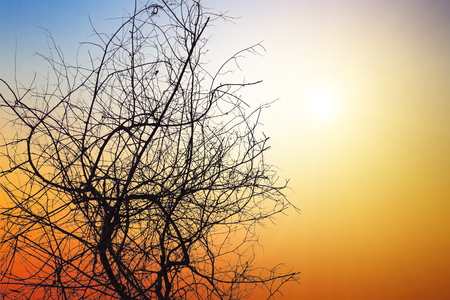 Dead tree on natural background blurring or warm colors and bright sun light. Dry trees die on sky background.