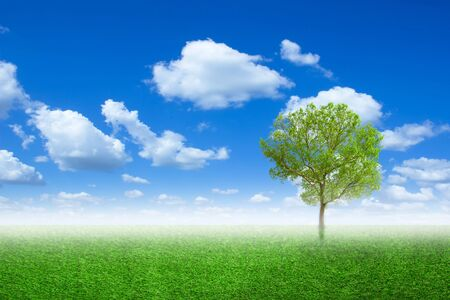 Lone tree in a meadow with on green field or spring tree in green field of grass and blue sky on background. Colorful landscape tree and fog in clear nature, with free copy space. 스톡 콘텐츠 - 128889677