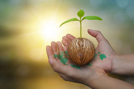 Close up image of human hand holding a green seed sprout growing tree plant on blurred forest nature autumn sunset background. World map green in hand. Eco earth day and environment day concept. Banque d'images