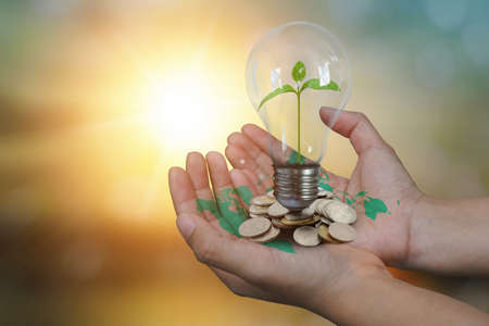 Close up image of human hand have world map in holding a green sprout growing of tree planting in light bulb on blurred nature sunset background. Eco earth day, environment and Energy saving concept.