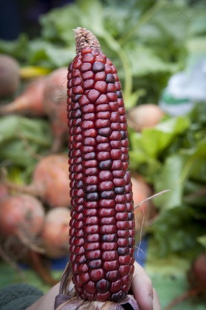 Person holding an ear of Indian corn with vegetables in the background. Vertical shot. Stock Photo - 7476217