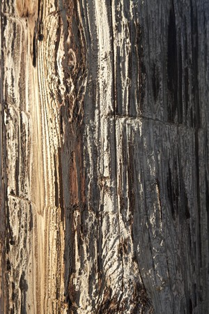 Closeup of the weathered and cracked surface on a wooden telephone pole. Vertical shot.