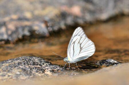 beautifu: White Butterfly Stock Photo