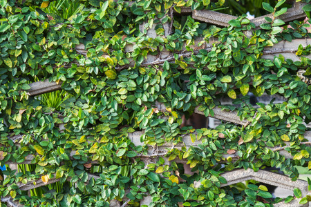 vertica: Green leaves wall background