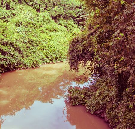 rivulet: the rivulet in the jungle, vintage toning
