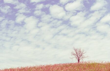 unruffled: dry tree on the field and beautiful sky, vintage toning Stock Photo