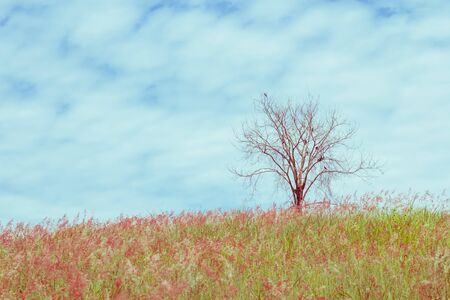 unruffled: dry tree on the field and sky, vintage toning