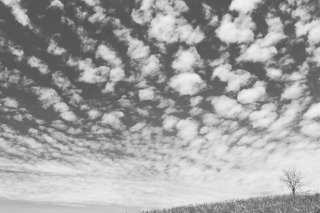 unruffled: dry tree on the field and beautiful sky on black and white background