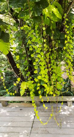unruffled: green tree and creeper