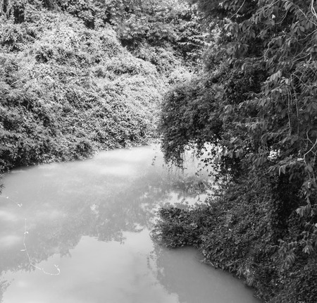 rivulet: the rivulet in the jungle black and white background