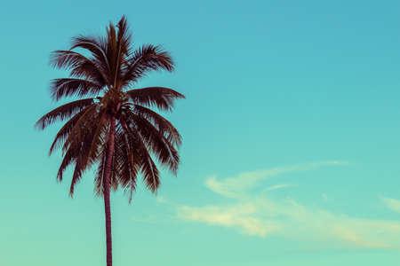 albero da frutto: Palma da cocco, messa a fuoco selettiva, tonificante epoca