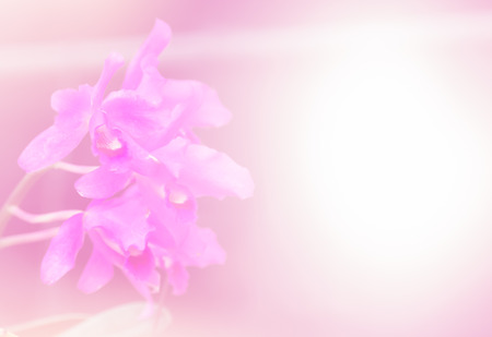 abstract flower background. made with color filters in soft color and blurred style . Standard-Bild