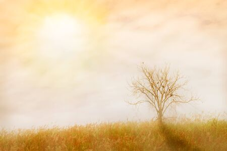 unruffled: abstract nature background.  made with color filters in soft color and soft focus, blurred style.
