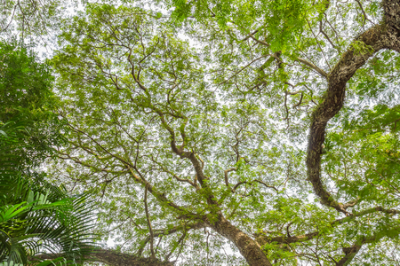 steadfast: tree branch of green leaves on a big tree, nature background