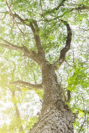 unruffled: tree branch of green leaves on a big tree, nature background with filter color