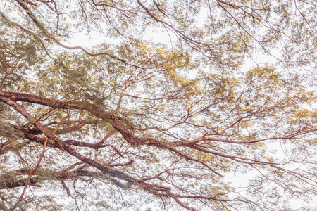 unruffled: tree branch on a big tree, nature background,vintage toning