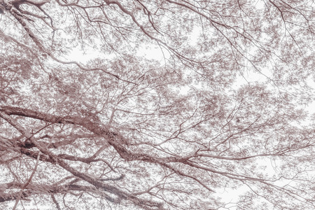 unruffled: tree branch on a big tree, nature background,sepia toning