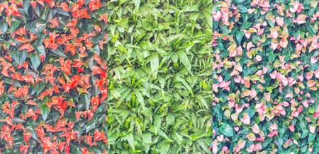 spadix: colorful wall of spadix flowers, selective focus Stock Photo