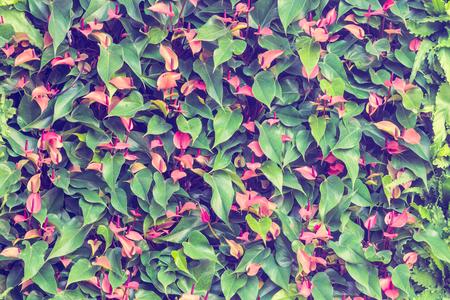 spadix: wall of spadix flowers,selective focus,vintage toning