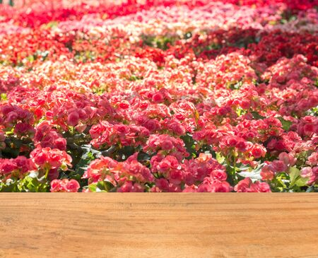 lucid: colorful flower of valentineday, Template mock up for display of your product for valentine background Stock Photo