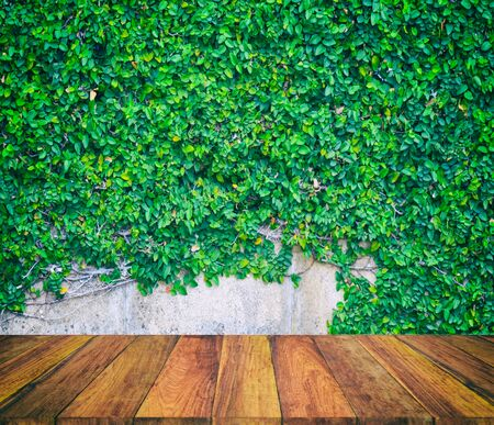 pellucid: old wood texture and green leaf background Stock Photo