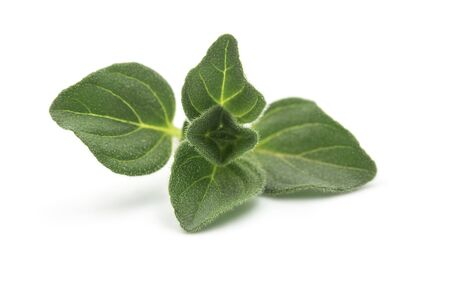 Raw organic oregano leaf or marjoram on white isolated background. Fresh and dry oregano is ingredient for Italian food, it have aromatic and high nutrition. Concept about herb and spice for cooking.