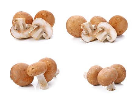 Brown champignon mushroom isolated on white