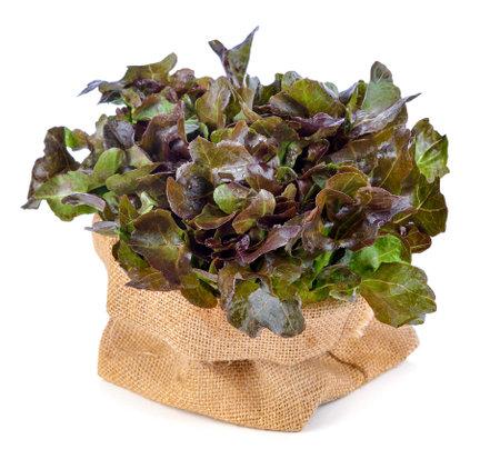Red oak lettuce isolated on white