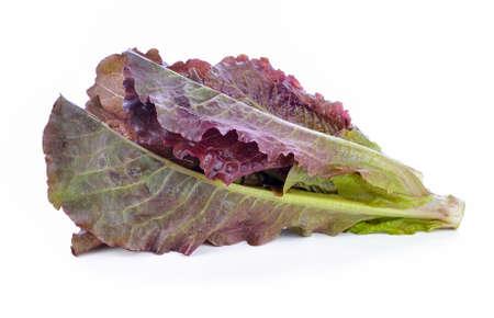 Hydroponic vegetable, red cos lettuce on white Standard-Bild - 163360183