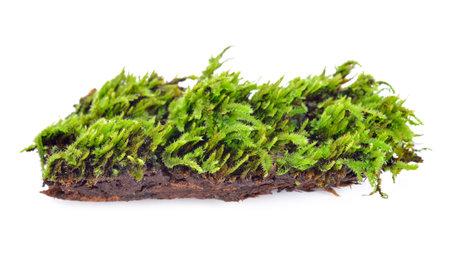 Green moss isolated on white bakground Standard-Bild - 160699492