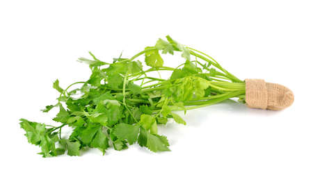 resh celery isolated on a white background