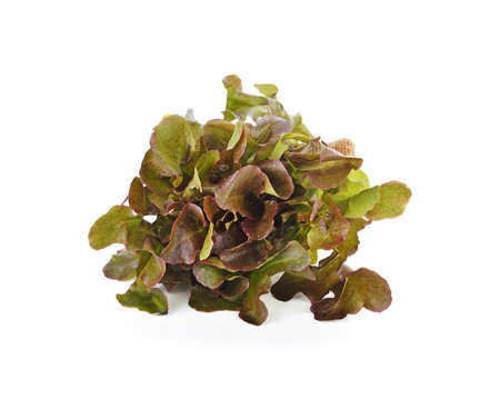 red lettuce isolated on white background
