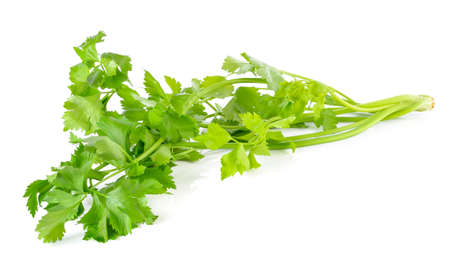 Fresh celery isolated on white background. 免版税图像