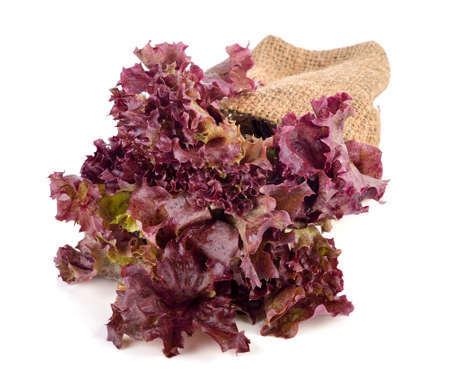 Fresh red lettuce isolated on white background 免版税图像