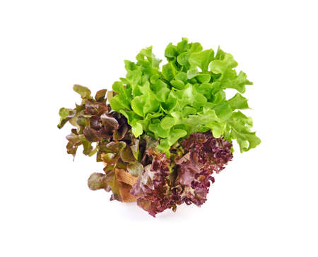 Fresh lettuce leafs isolated on white background 免版税图像