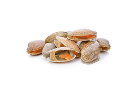 Surf clam, Short necked clam, Carpet clam, Venus shell, Baby clam isolated on white background