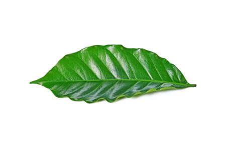 leaves on a white background Standard-Bild