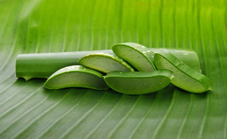 freshly sliced Aloe Vera on green background