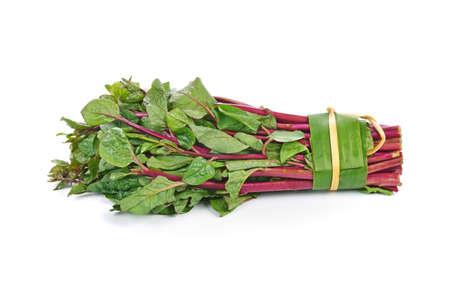 Ceylon spinach or Malabar spinach isolated on white background Standard-Bild