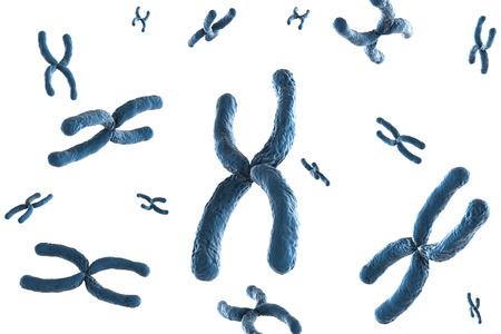 cromosoma: 3d que rinde el cromosoma azul sobre fondo blanco