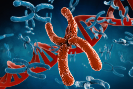 chromosome x y: 3d rendering red chromosome with dna helix on blue background Stock Photo