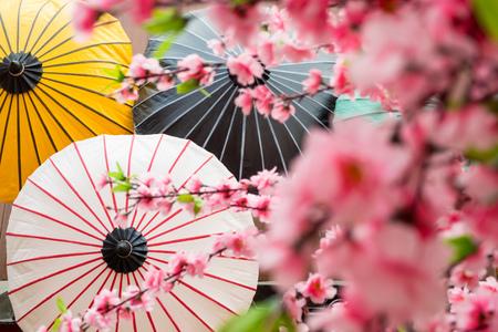 paper umbrella: japanese decoration background with blossom sakura and umbrella